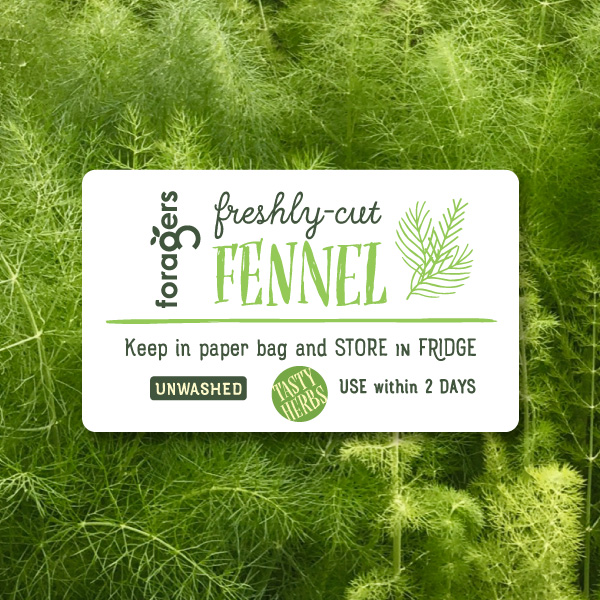 Fennel (freshly cut)